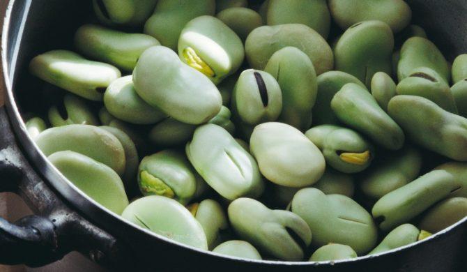 Une nouvelle fiche légume : la fève