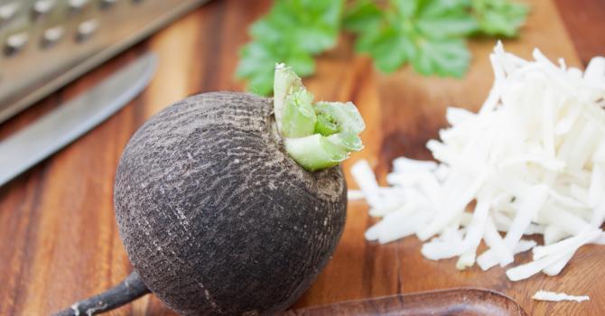 Une nouvelle fiche légume : le radis noir