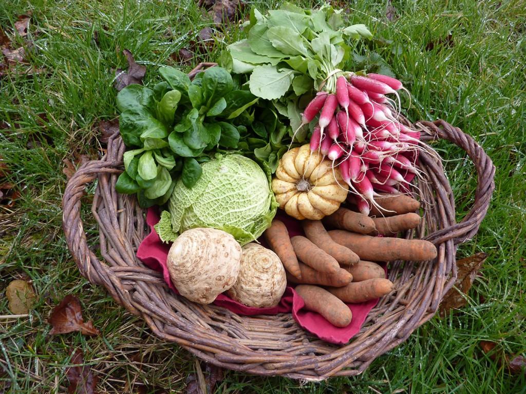 Panier legumes bio