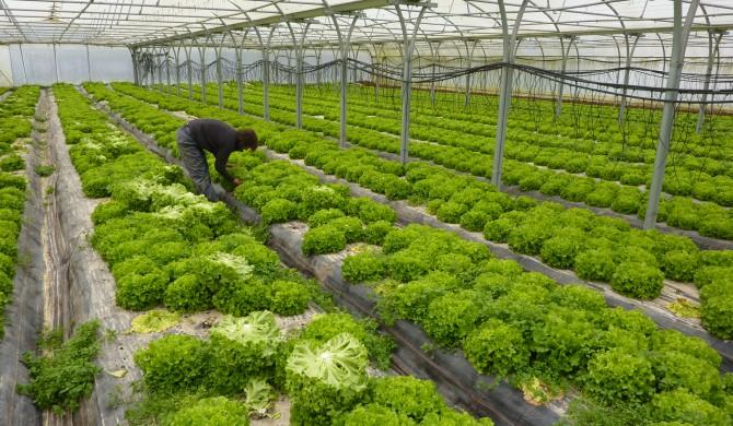 Salades de début de saison